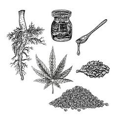 hand drawn set with hemp leaf cannabis oil cone vector image