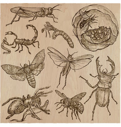 Insect - an hand drawn pack line art vector