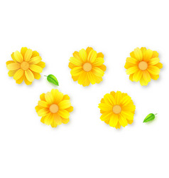 set buds flower and green leafs daisy vector image