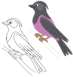 Starling vector image