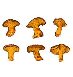various fungi chanterelle vector image