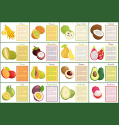 Citron kiwano and coconut set vector