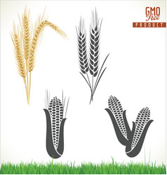 ears wheat and corn vector image