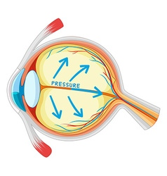 Eyes disease in closer look vector