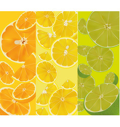 fruit close up banner vector image