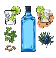 Gin bottle shot glass with ice and lime juniper vector image