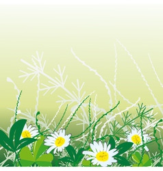 white camomiles in green grass vector illustration vector image vector image