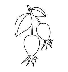 dogrose berry bunch icon outline style vector image vector image