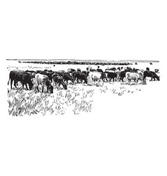 Cattle vintage vector
