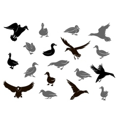 Duck silhouettes isolated on the white background vector