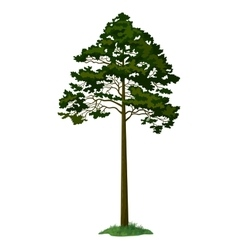 Pine Tree and Green Grass vector