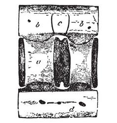Shark vertebra vintage vector