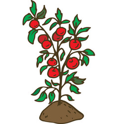 Tomato plant on garden bed vector