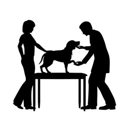 vet examining dog vector image