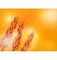 wheat sunset background vector image