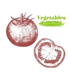 Tomato hand draw sketch vector