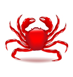 Crab isolated on white vector image vector image