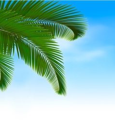 Palm leaves on blue background Summer holidays vector image