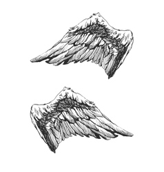 Hand drawn angel wings eps8 vector image