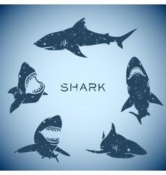 Shark concept vector