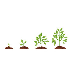 stage growth plant growth stages from seed to vector image