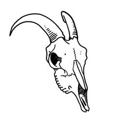 tattoo skull skull a sheep horns ink vector image