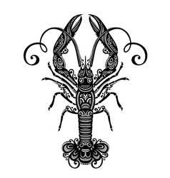 Ornate Sea Langoustine vector image