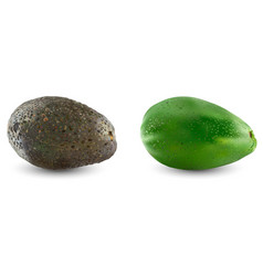collection of two types of avocado set of ripe vector image