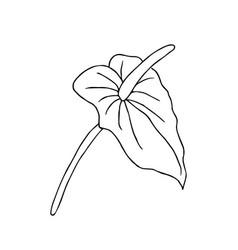 Doodle flower hand drawn jungle flower anthurium vector