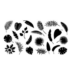 exotic leaf silhouette tropical monstera vector image