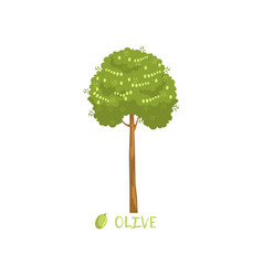 olive tree with name vector image