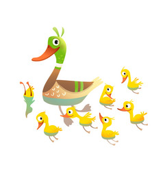 Pond birds family mother duck and her chicks vector