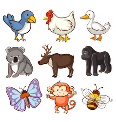 set different types animals on white vector image