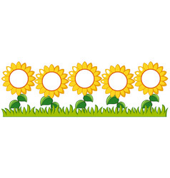 Sunflowers garden with writing space vector
