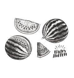 watermelon and slices sketch vintage vector image