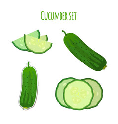 cucumber set made in cartoon flat style vector image vector image