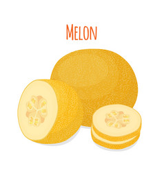 yellow ripe melon cartoon flat style vector image