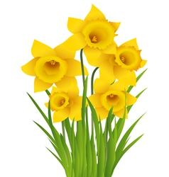 Daffodil vector image vector image