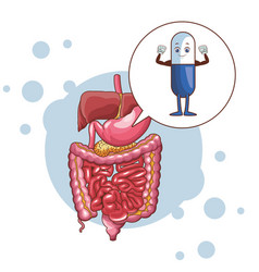 Digestive system with pills vector