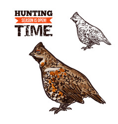 Hunting bird hazel grouse sketch vector