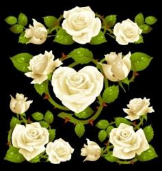 white rose design elements vector image vector image