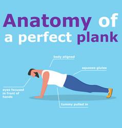 Anatomy perfect plank banner vector