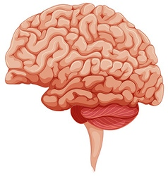 Human brain on the side vector