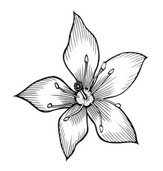 lily hand drawn vector image