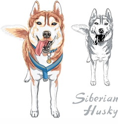 Dog siberian husky breed standng and smiling vector