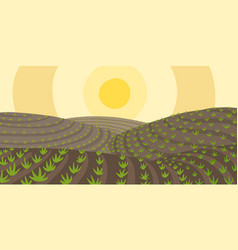 Agricultural field landscape growing young plant vector