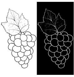 bunch grapes sketch vector image