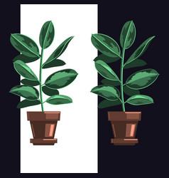 indoor home plant houseplant flat vector image