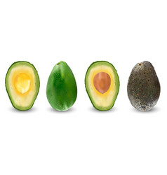 set of ripe realistic fruits of avocado vector image