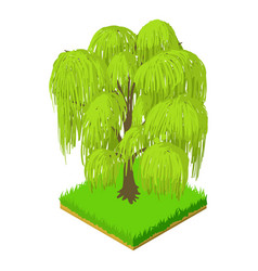 Weeping willow icon isometric style vector